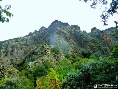 El Bierzo;Busmayor;León;arbol conifero aceite de mora ruta montgo duquesa de osuna